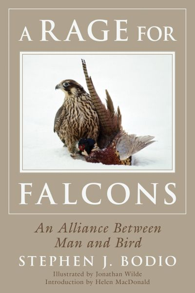 Buy Rage for Falcons at Amazon